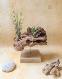 Popular air plant display ideas for home 33