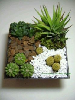 Popular air plant display ideas for home 38