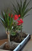 Popular air plant display ideas for home 41
