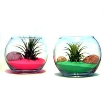 Popular air plant display ideas for home 44