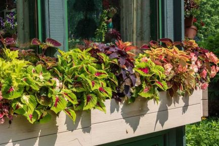 Attractive window box planter ideas to beautify up your home 17