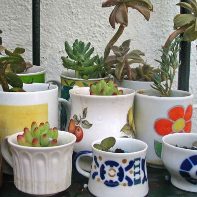 Impressive mini garden mug ideas to add beauty on your home 01
