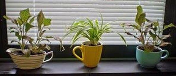 Impressive mini garden mug ideas to add beauty on your home 21