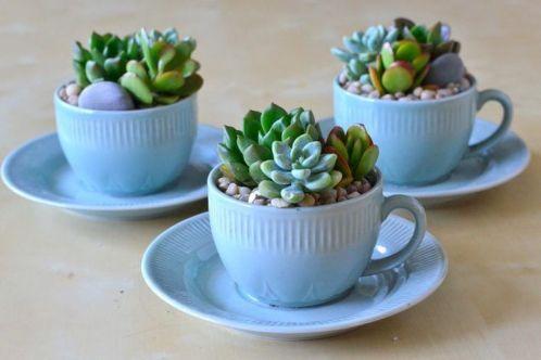 Impressive mini garden mug ideas to add beauty on your home 37