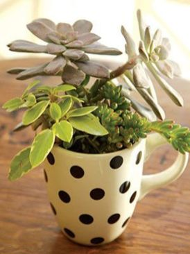 Impressive mini garden mug ideas to add beauty on your home 40