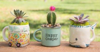 Impressive mini garden mug ideas to add beauty on your home 53