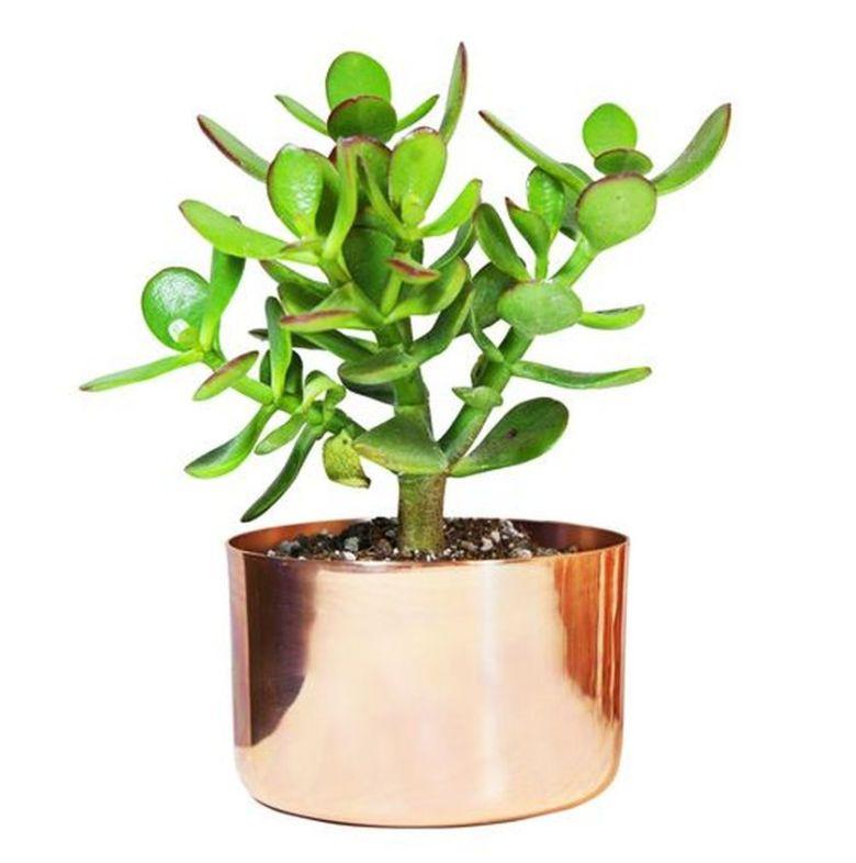 Impressive mini garden mug ideas to add beauty on your home 54
