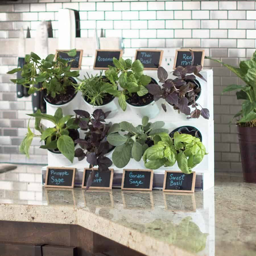 Bring it to your kitchen Revitalizing Room Aura With Captivating Greenery Decoration Ideas To Clean The Air