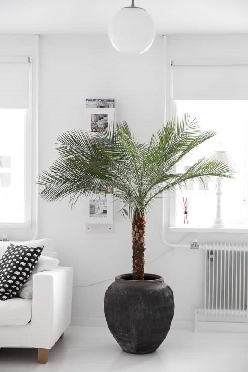 Indoor palm trees Revitalizing Room Aura With Captivating Greenery Decoration Ideas To Clean The Air