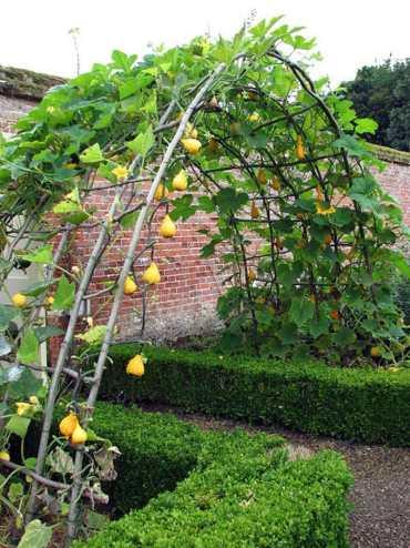 Diy-garden-trellis-ideas-build-cucumber-trellis-plant-structure-designs-screen-wall-vines-pergola-vegetables-flowers-apieceofrainbow-5