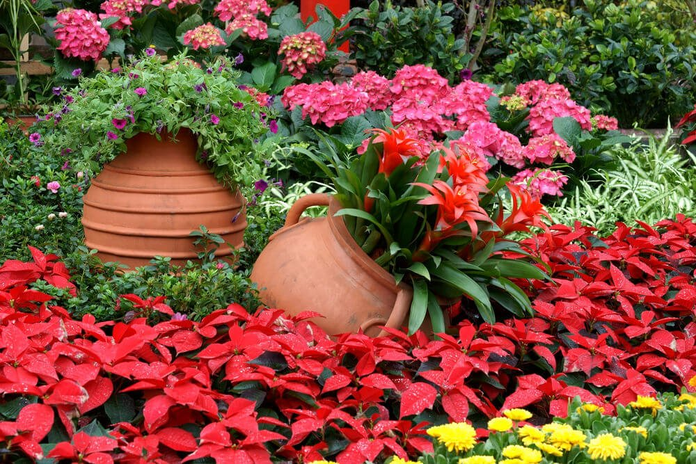 Easy Ways to Add Color to Your Shade Garden