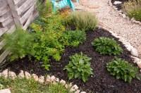 lantana | A Round Rock Garden