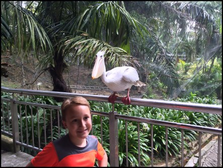 Don't get too close to the pelican!