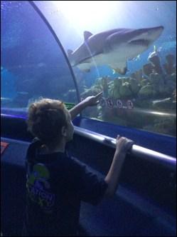 Amazing underwater tube at the Aquarium