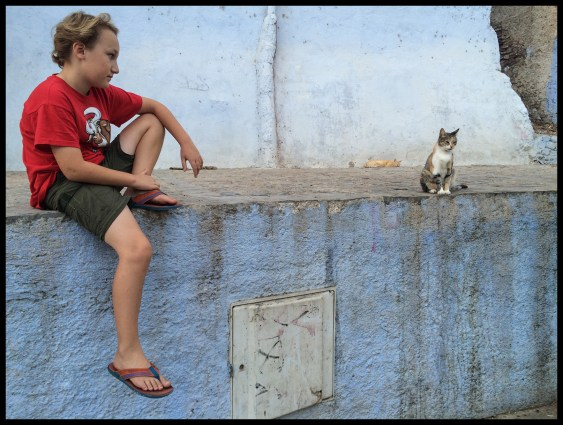 There are cats ALL OVER Chefchaouen.