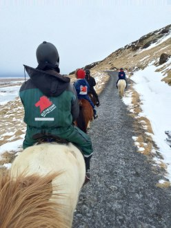 Iceland Horse Riding Tour