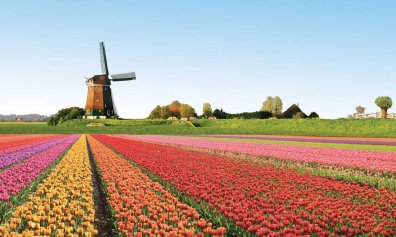 amsterdam-city-break-tulips