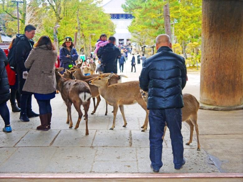 奈良鹿 | 東大寺 | 奈良 | 日本 | 巡日旅行攝