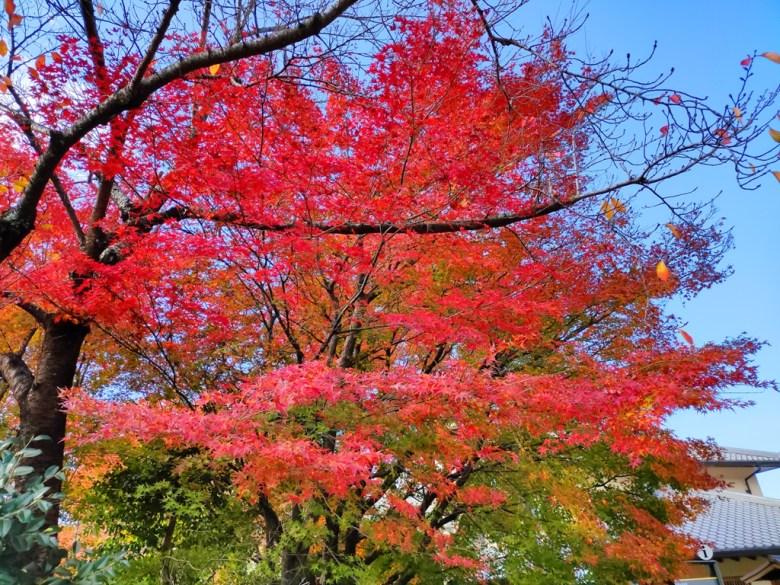賞楓 | 清水寺 | 紅葉名所 | 京都 | 日本 | 2019 | 巡日旅行攝