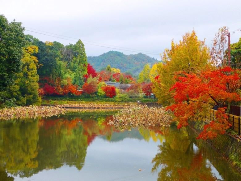 京都府嵐山 | 日本 | 巡日旅行攝
