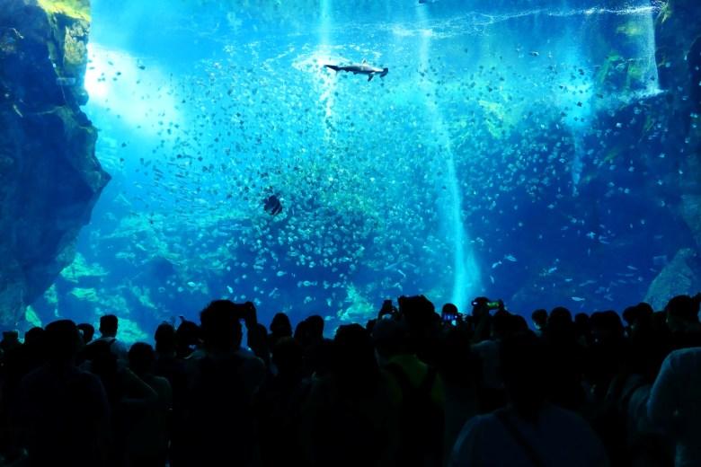 壯觀的水族箱 | Xpark | Zone 1 | Taiwan | RoundtripJp