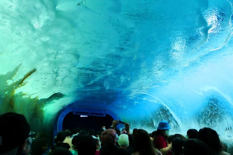 海底隧道 | Xpark | 五感體驗水族館 | 青埔 | 桃園 | 巡日旅行攝