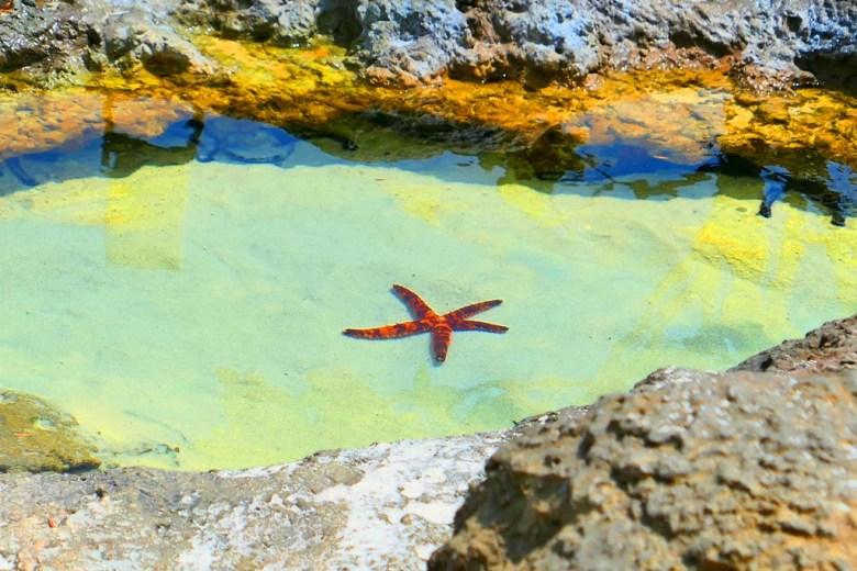 潮間戲灘 Discovery Reef | 戶外 | Zone 3 | Taiwan | RoundtripJp