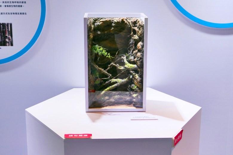 雨林探險缸體模型 | Rainforest Adventure | Xpark | Exhibition | RoundtripJp