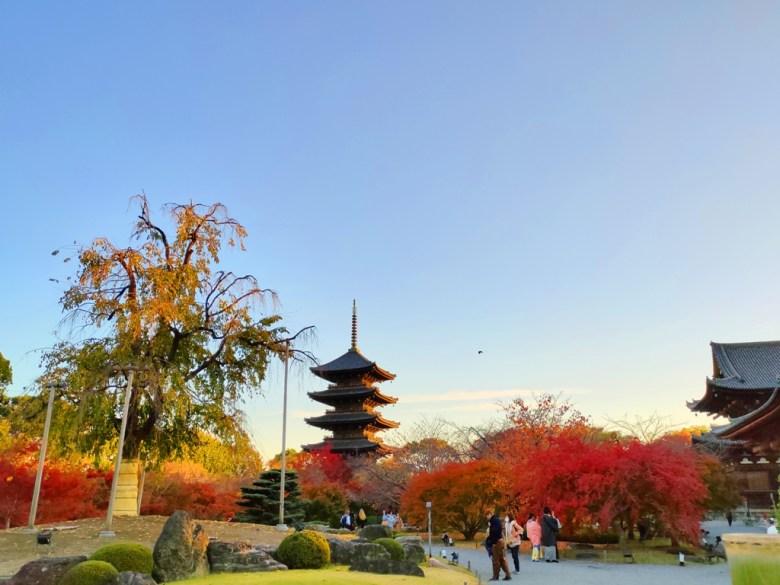 楓葉 | とうじ | 東寺 | 京都 | 近畿(關西) | 日本 | 巡日旅行攝