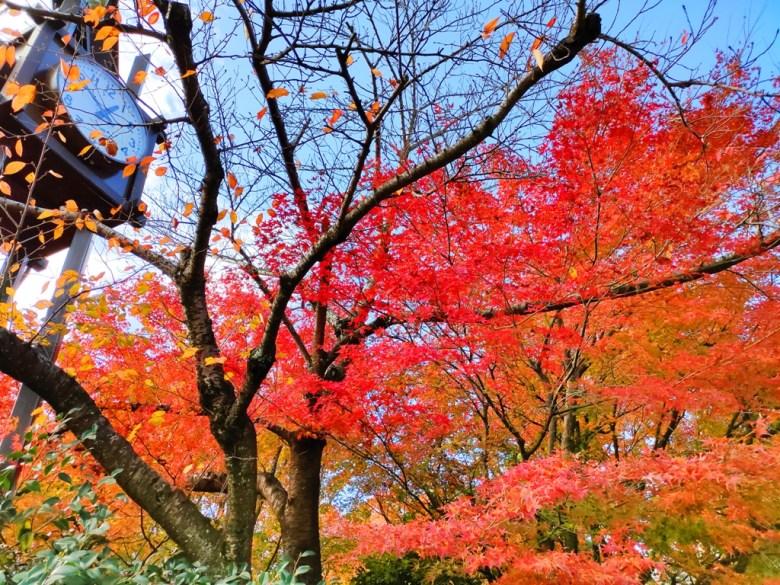 楓葉 | きよみずでら | 清水寺 | 京都 | 近畿(關西) | 日本 | 巡日旅行攝