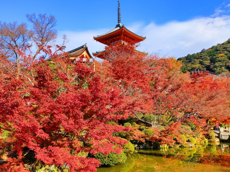 Maple | きよみずでら | 清水寺 | Kyoto | Kansai | Japan | RoundtripJp