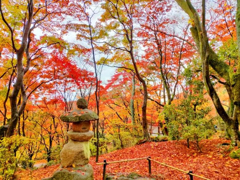 楓葉 | じょうじゃっこうじ | 常寂光寺 | 京都 | 近畿(關西) | 日本 | 巡日旅行攝