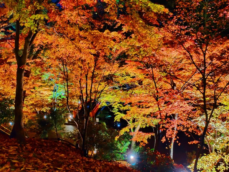 Maple | きたのてんまんぐう | 北野天滿宮 | Kyoto | Kansai | Japan | RoundtripJp