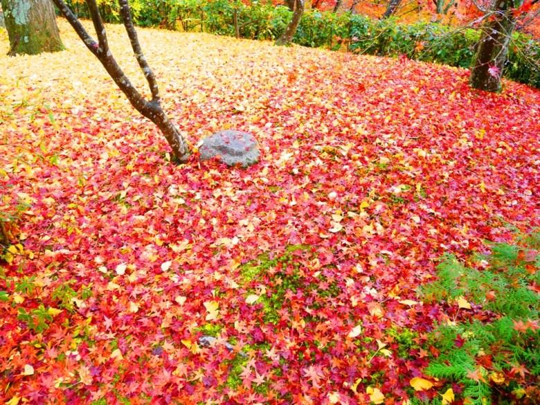 Maple | じょうじゃっこうじ | 常寂光寺 | Kyoto | Kansai | Japan | RoundtripJp