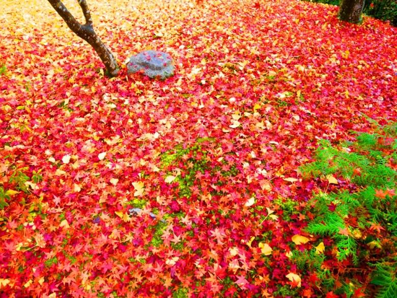 Ginkgo Biloba | じょうじゃっこうじ | 常寂光寺 | Kyoto | Kansai | Japan | RoundtripJp