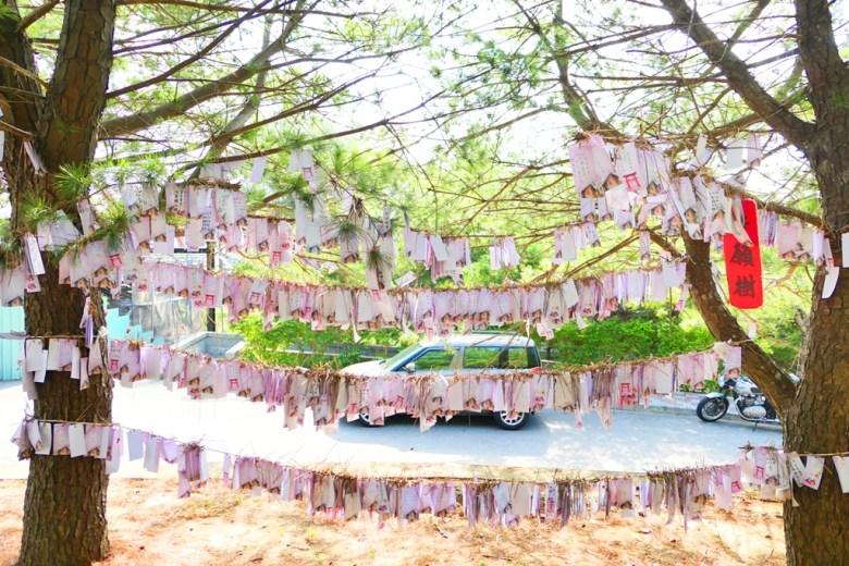 祈福卡 | 許願樹 | 苗栗通霄神社 | Japanese Style In Taiwan | 巡日旅行攝