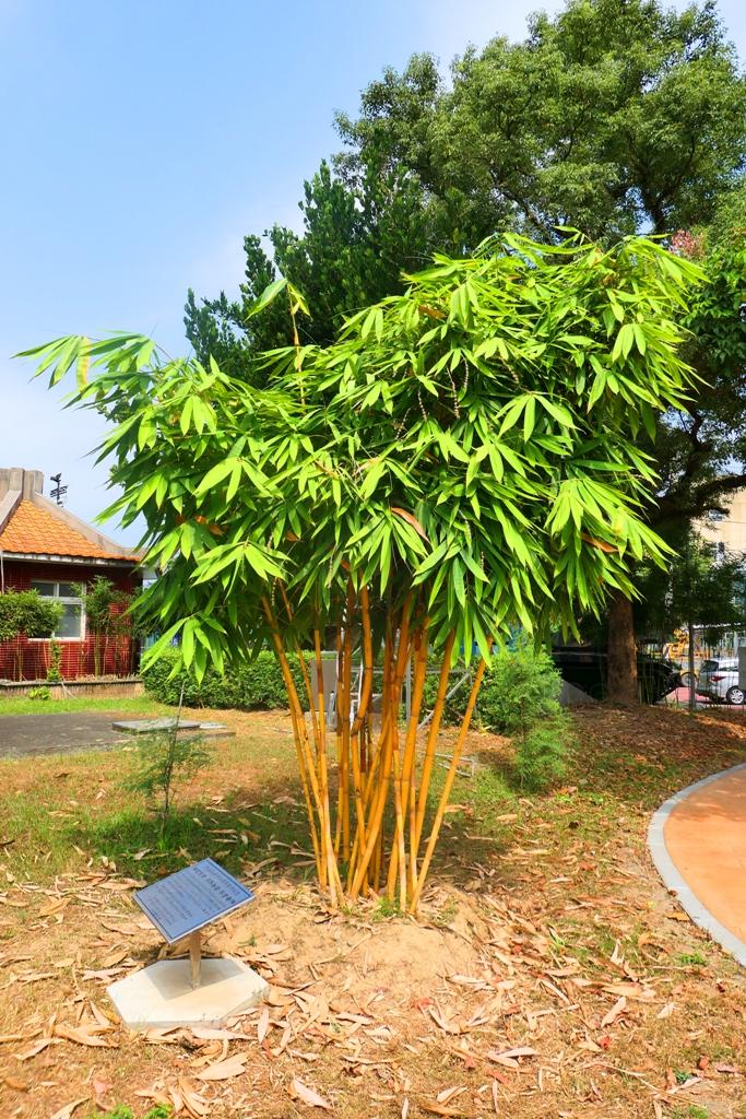 黃金綠竹 | 竹山公園 | Takeyama Shrine | Zhushan | Nantou | RoundtripJp