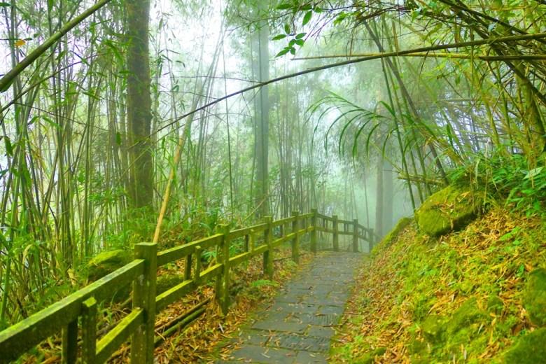 奮起步道 | Fenqi Trail | 竹林古道 | Fenqihu | Mt.ali | Chiayi | Taiwan | RoundtripJp