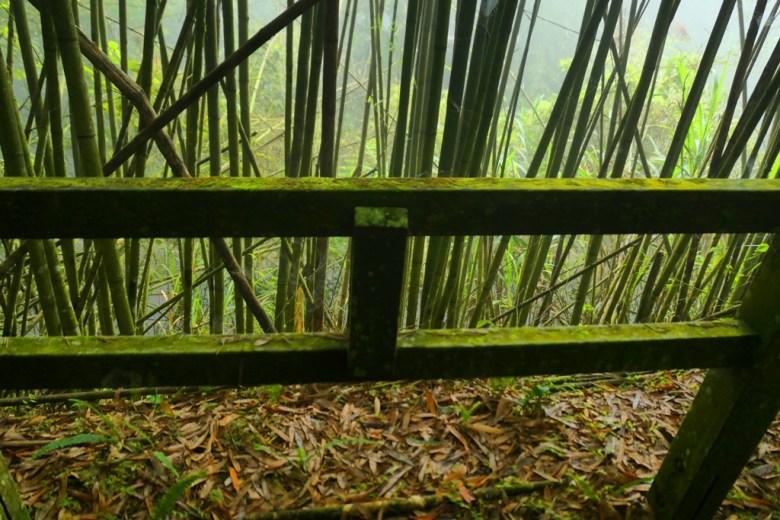 佈滿青苔的步道欄杆 | 竹林秘境 | 奮起步道 | 嘉義 | 臺灣 | 巡日旅行攝