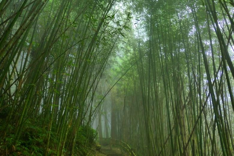 竹林秘境 | 奮起步道 | Fenqi Trail | 嘉義 | 臺灣 | 巡日旅行攝