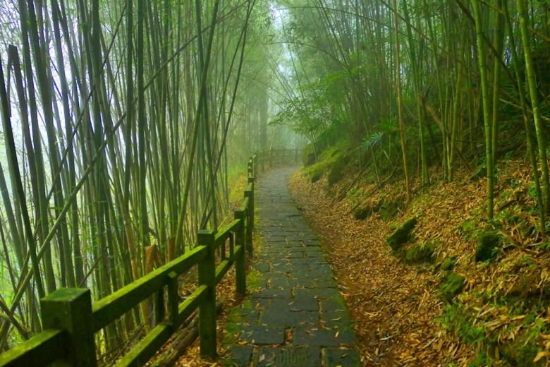 竹林古道 | Fenqi Trail | Fenqihu | Mt.ali | Chiayi | Taiwan | RoundtripJp