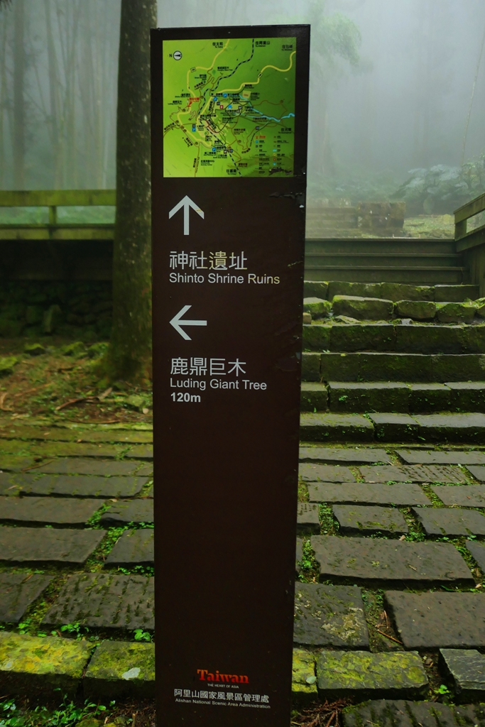 路線指示牌 | 直走神社遺址 | Shinto Shrine Ruins | 往左鹿鼎巨木 | Luding Giant Tree | Fenqihu | RoundtripJp