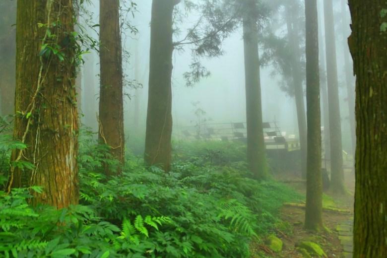 樹海秘境 | 奮起湖神社遺跡 | 奮起湖 | 嘉義 | 臺灣 | 巡日旅行攝