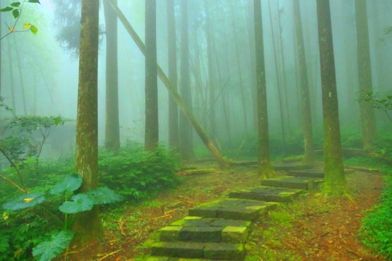 雲霧繚繞 | 樹海秘境 | 石階古道 | 奮起湖 | 阿里山 | 嘉義 | 臺灣 | 巡日旅行攝
