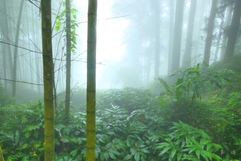 迷霧森林 | 奮起湖 | 阿里山 | 嘉義 | 臺灣 | 巡日旅行攝