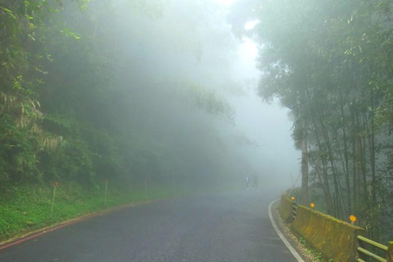 阿里山公路中和支線/169縣道 | 清幽霧氣 | 奮起湖 | 阿里山 | 嘉義 | 臺灣 | 巡日旅行攝
