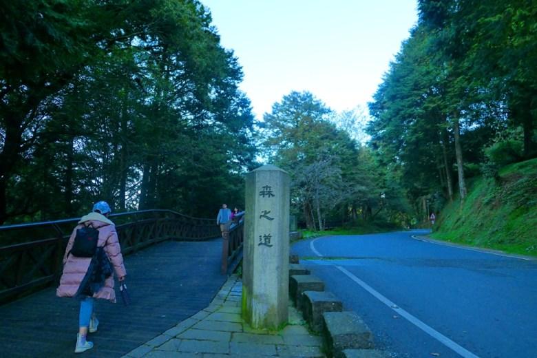 森之道 | 樹海之道 | 阿里山國家森林遊樂區 | 阿里山 | 嘉義 | 臺灣 | RoundtripJp
