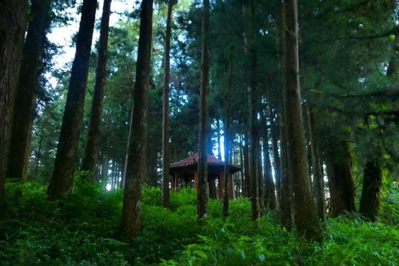 阿里山神社遺址 | Alishan Shrine Ruins | 樹海中的神社遺址 | 嘉義 | 臺灣 | 巡日旅行攝