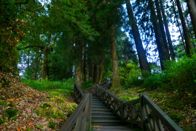 巨木群棧道 | Giant TreesPlankWalk | 阿里山 | 嘉義 | 臺灣 | 巡日旅行攝