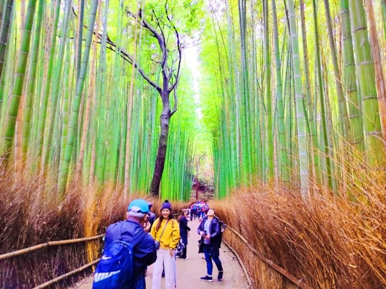 竹林小徑 | bamboo | 嵐山 | 京都 | 日本 | あらしやま | Kyoto | Japan | 巡日旅行攝